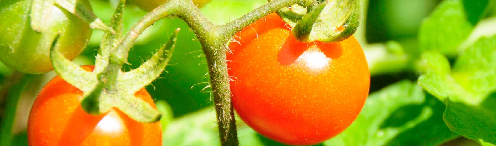 Inspired Living www.inspired-living.co.za